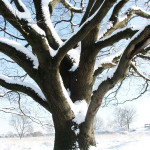 stockvault-tree-with-snow-in-winter131472