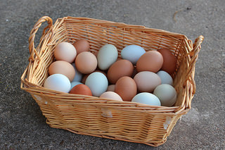 All these eggs in the basket...don't do it.